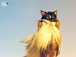 Felini cat on horseback