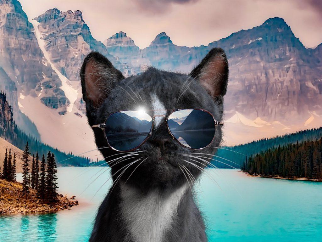 Felini at a mountain lake wearing cool sunglasses