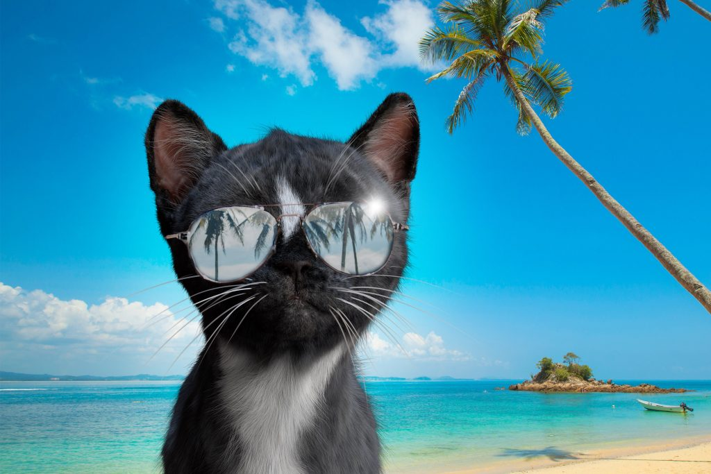 Felini the Cat wearing Sunglasses on the beach