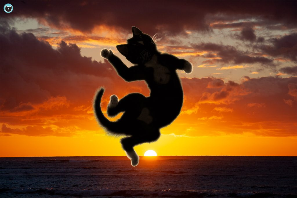Felini the cat jumps on top of beautiful sunset
