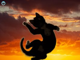 Felini the cat jumps on top of beautiful sunset