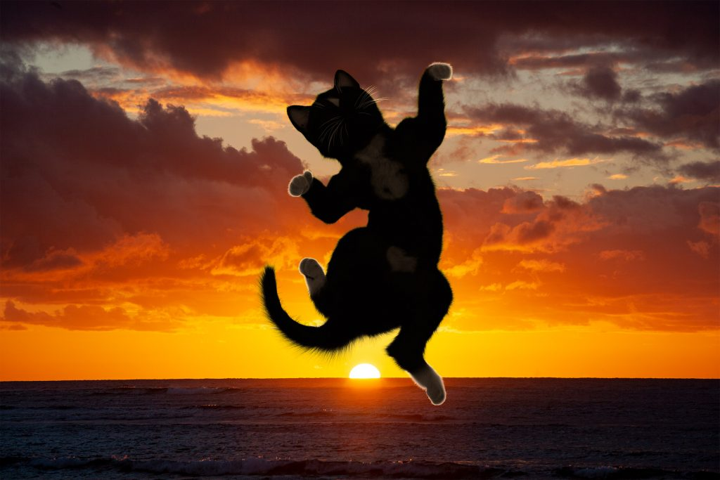 Felini the cat jumps on top of beautiful sunset alternative