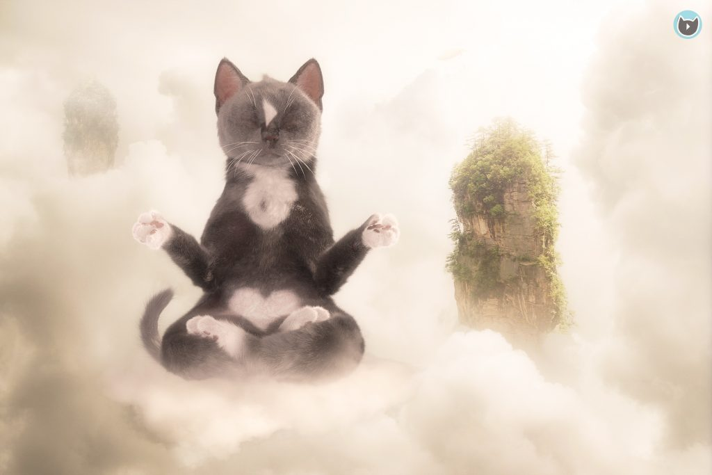 Cat Meditating in Yoga Position Floating in Sky