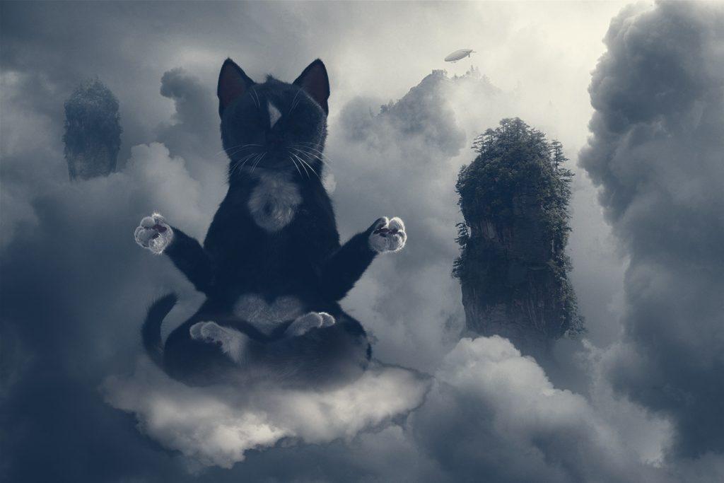 Felini Cat Still Meditating on his cloud when itsGetting Dark