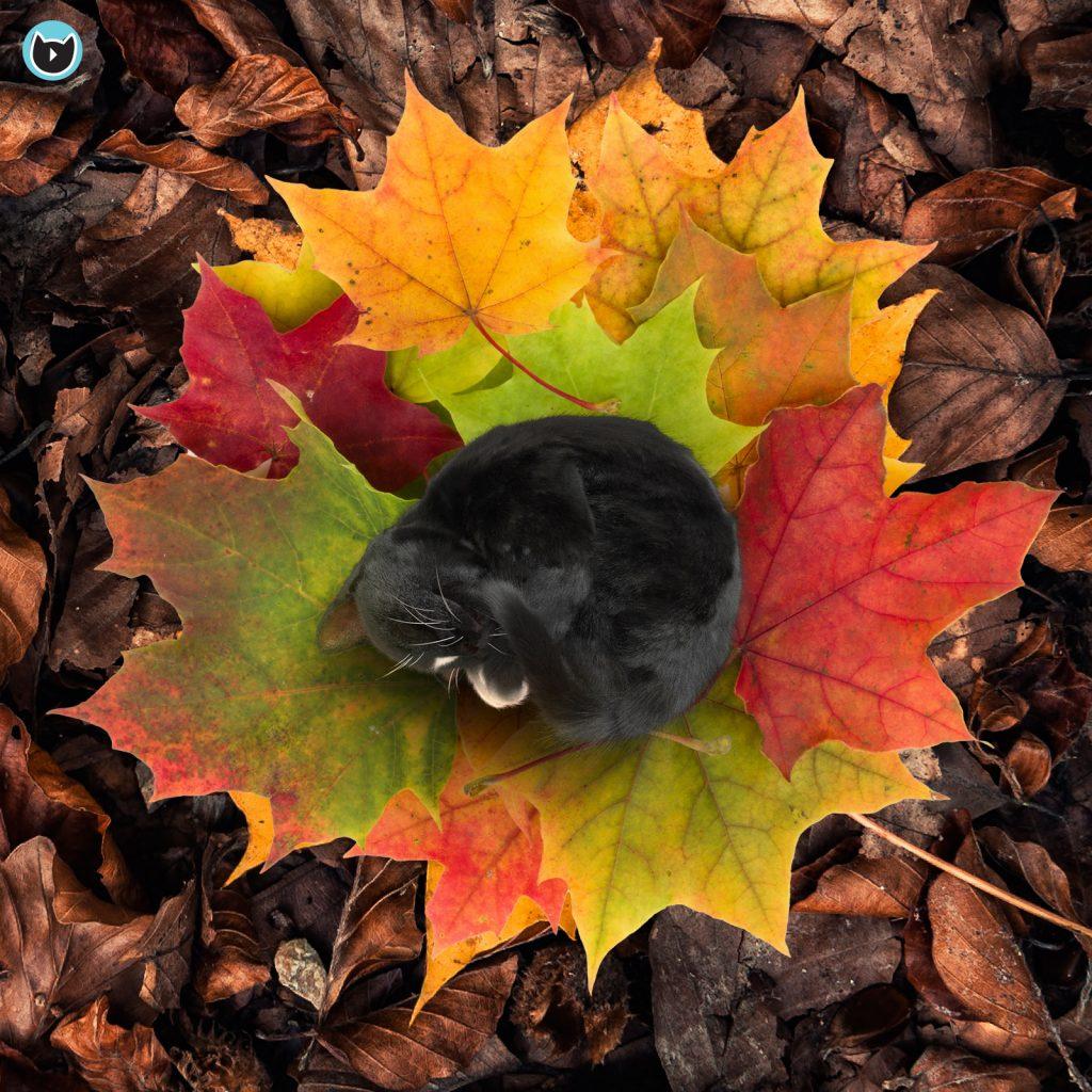 Mini kitty cat Felini on colorful fall leaves