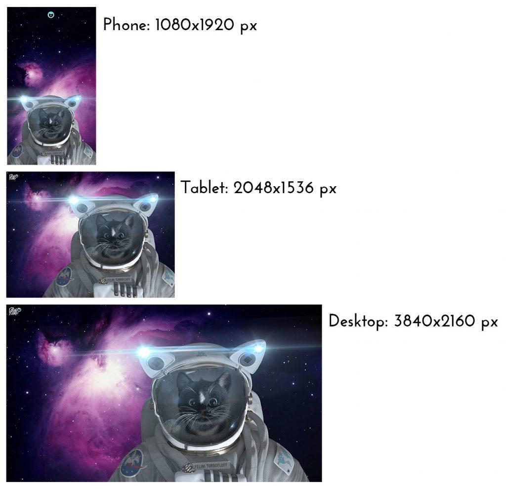 Free Felini Cat Wallpapers Size Comparison - Pixel Resolution on Phone/Tablet/Desktop