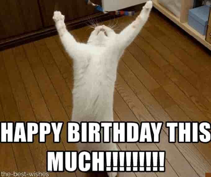 standing up cat holds paws wide apart with caption Happy Birthday this much!!!