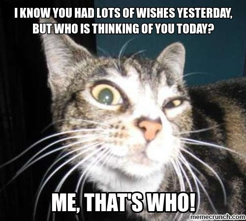 Cheeky cat face with caption: I know you had lots of wishes yesterday but who is thinking of you today?
