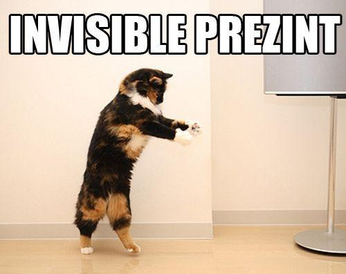 Cat looks like presenting an invisible present